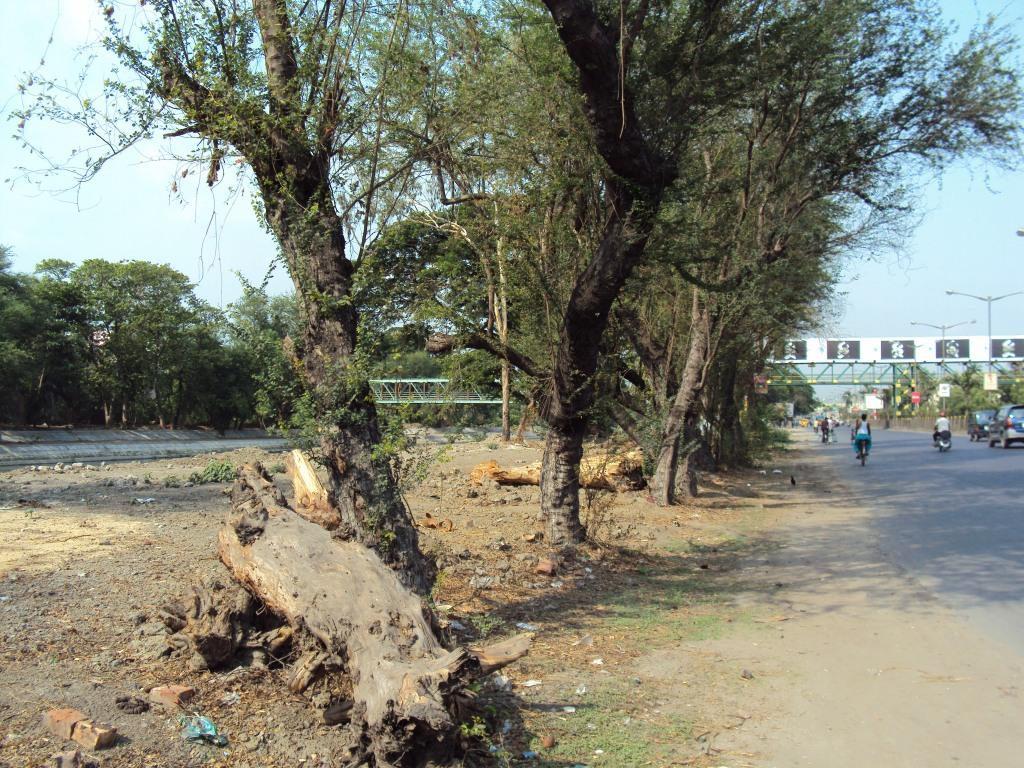 green kolkata, tree cutting