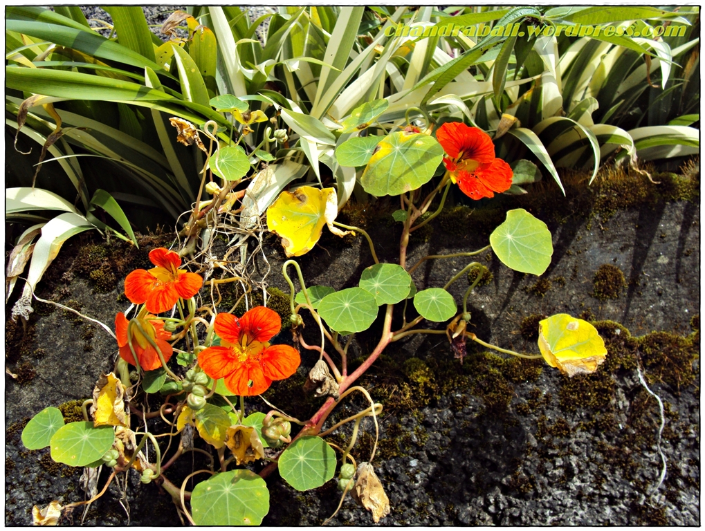 green and red flower, Sikkim