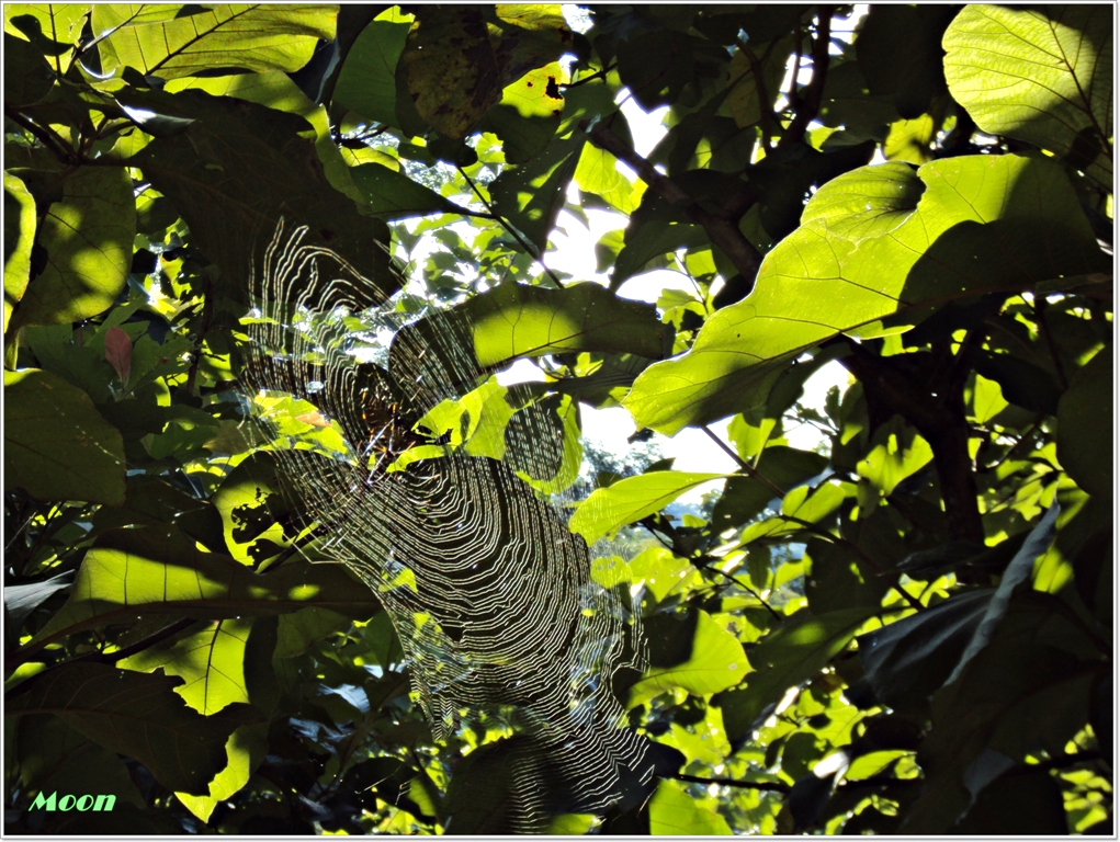 Photography, Spider's Web, Cob web, Namchi, Sikkim