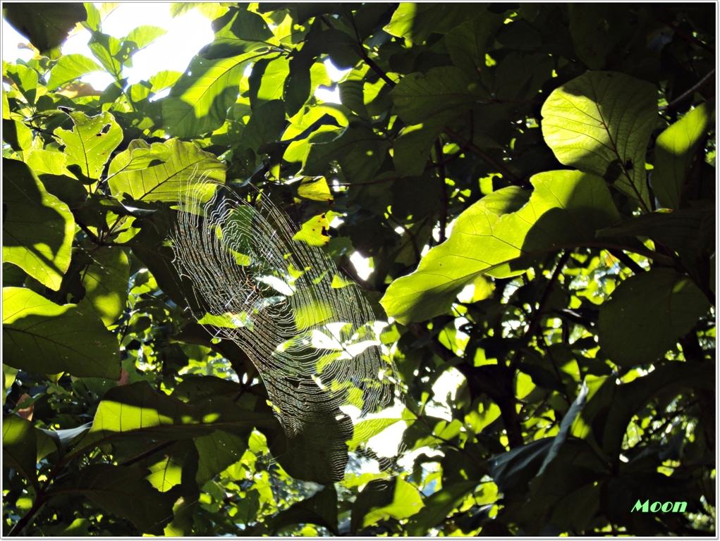 cob web, spider's web, Namchi, Sikkim