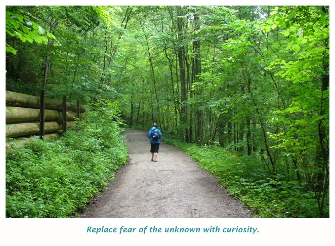 Travel through the woods, embrace the unknown
