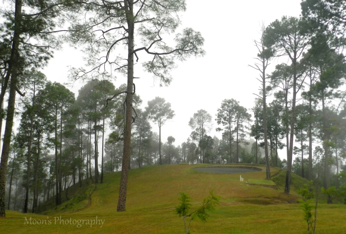 meadow, Ranikhet, Golf Course, Almora, Kumaon, Uttarakhand