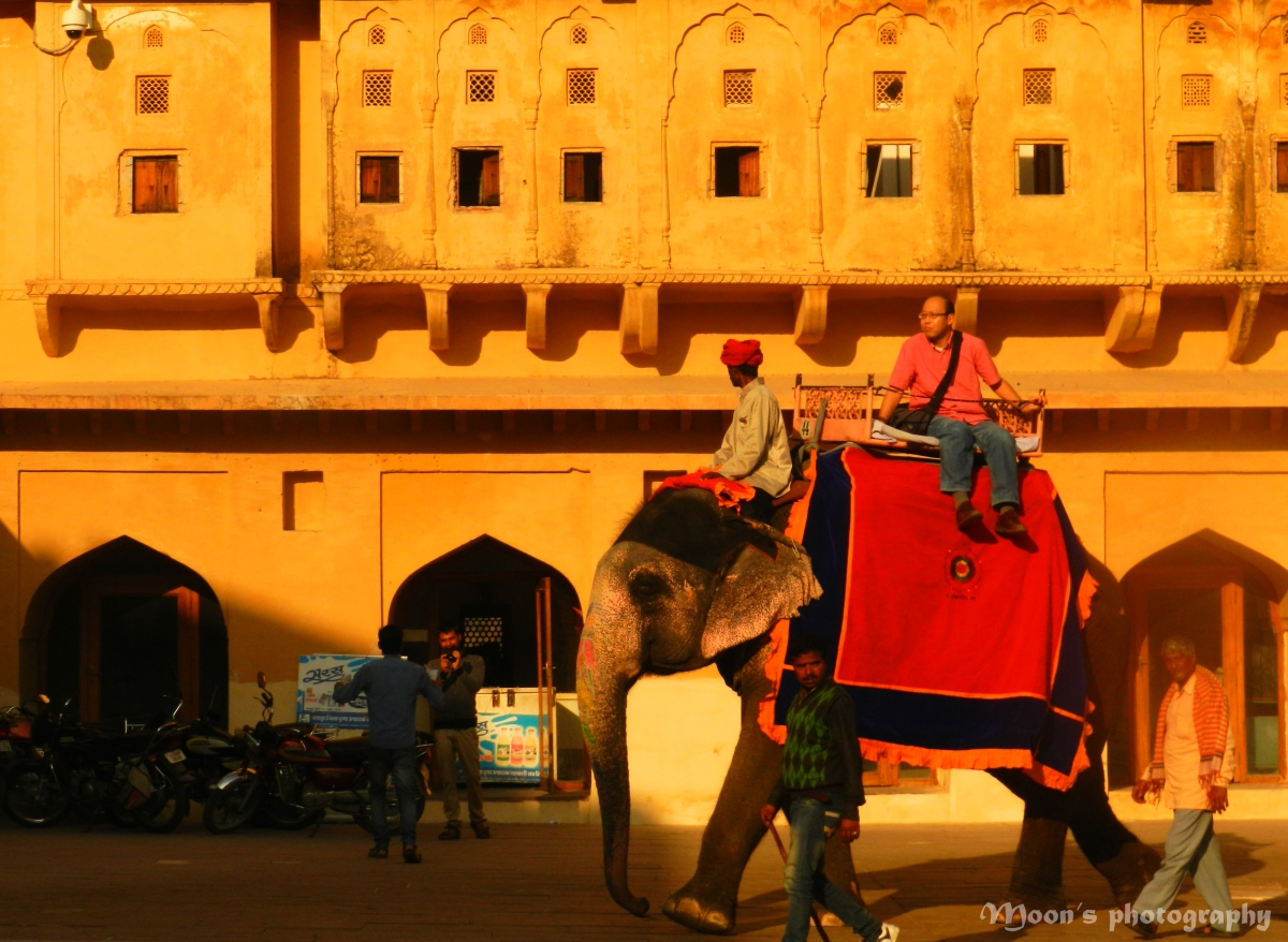 elephant ride at Amer Fort, Jaipur, Rajasthan