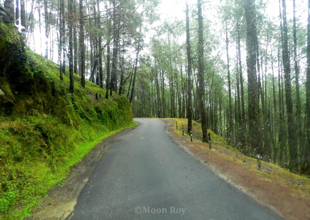 Choukori to Almora – A Beautiful Journey Through the Hills of Kumaon (1/6)