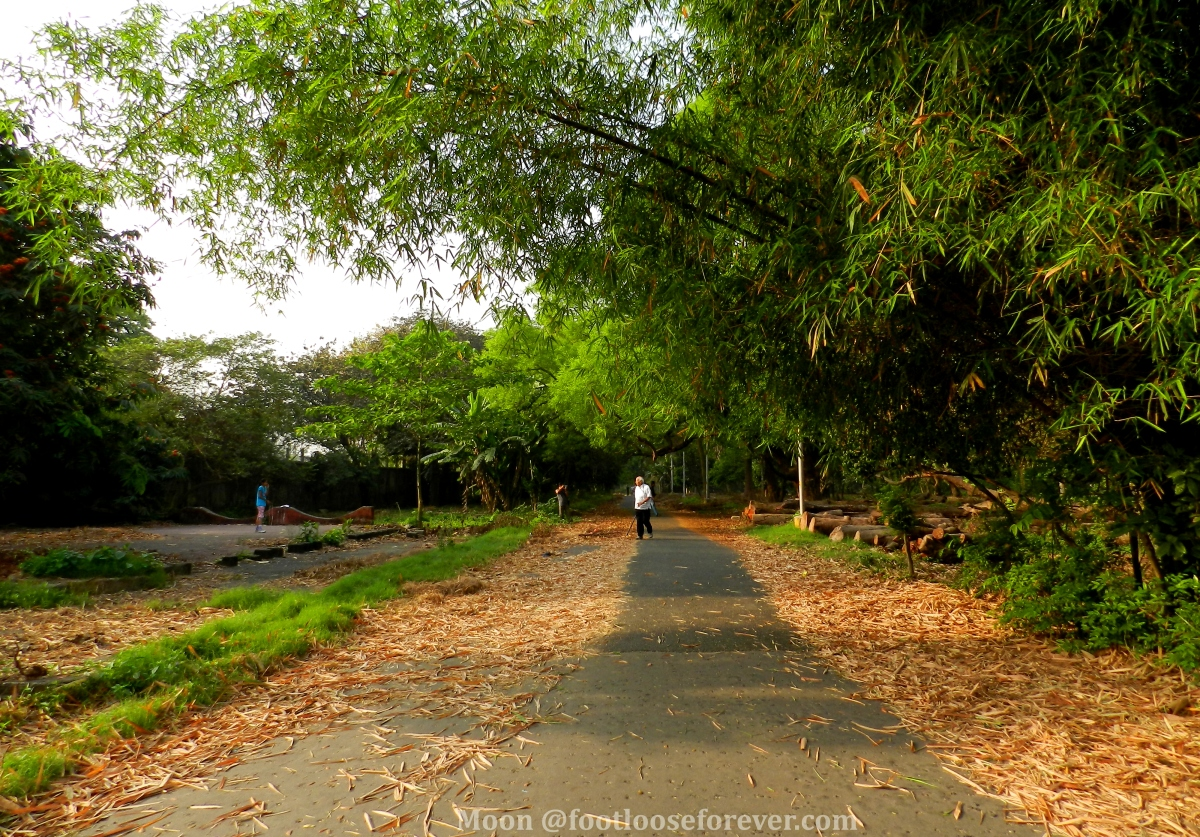 morning walk in Indian Botanic garden, Shibpur Botanical Garden, Howrah, Kolkata