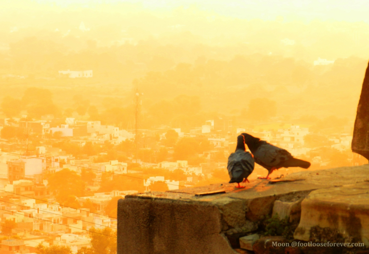expression, affection, love, love birds, chittor, chiittorgarh