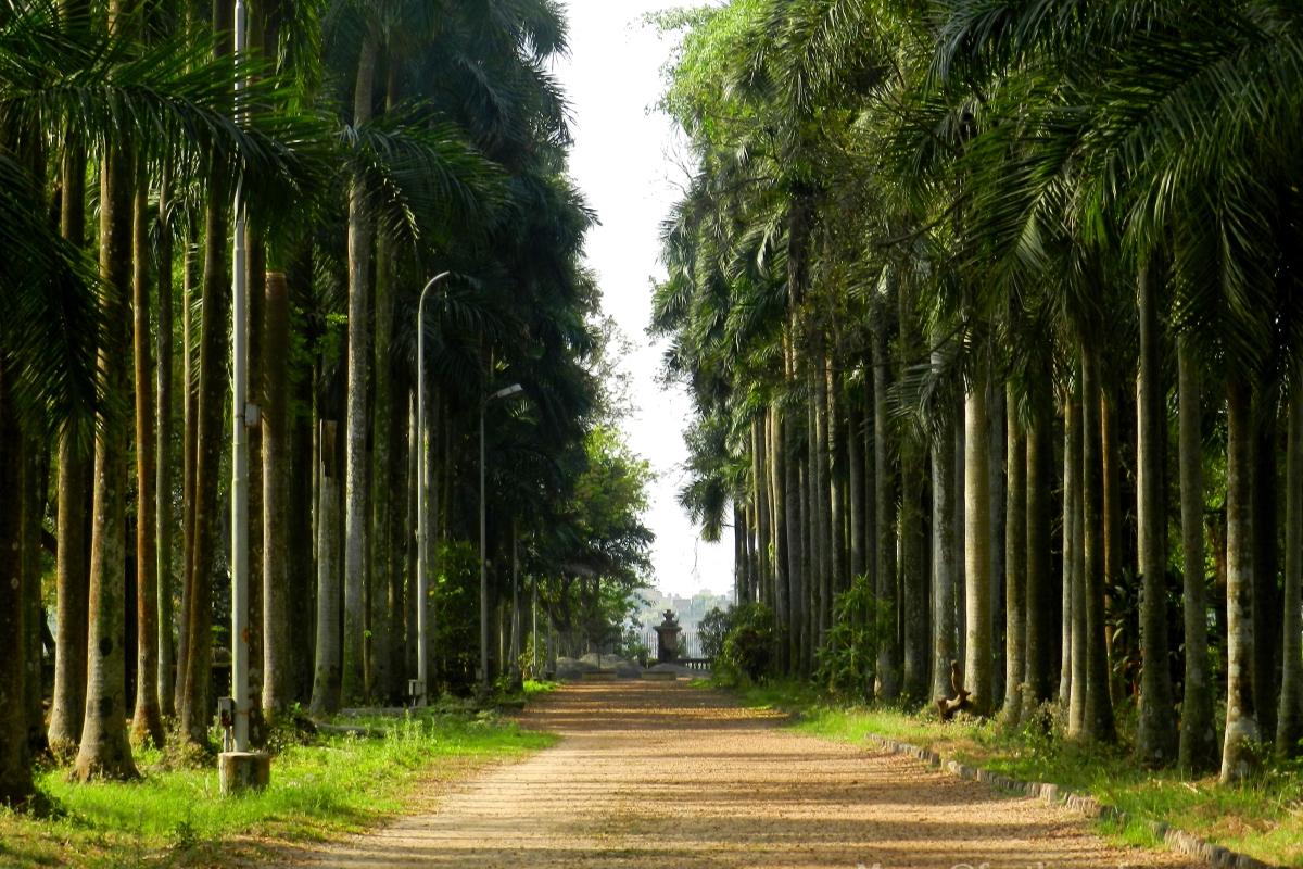Pathway, Shibpur Botanical Garden, Howrah, Kolkata