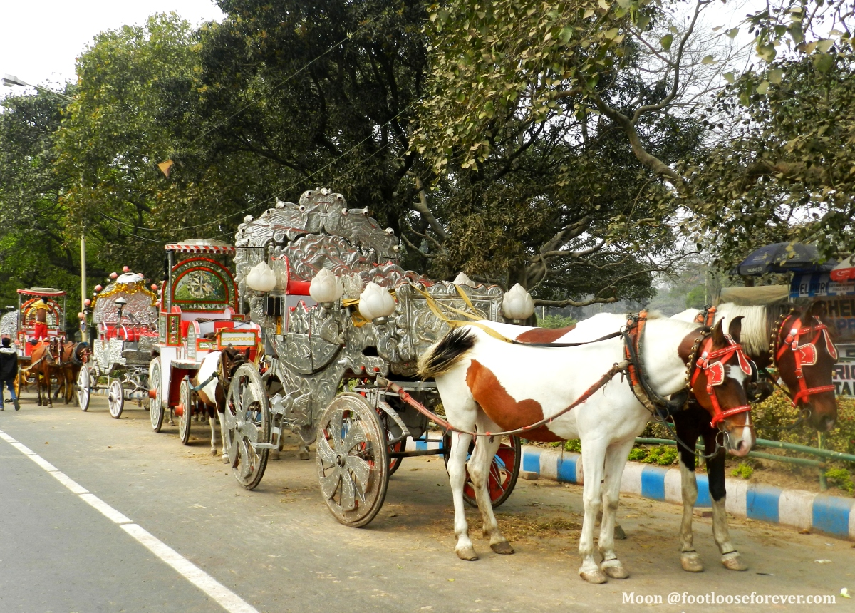 horse drawn carriage, victoria memorial hall, kolkata