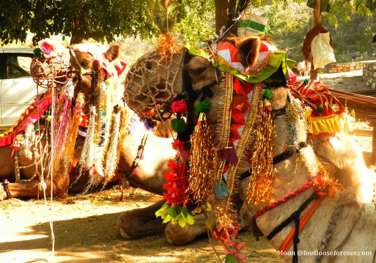 Pushkar camel safari, Pushkar things to do