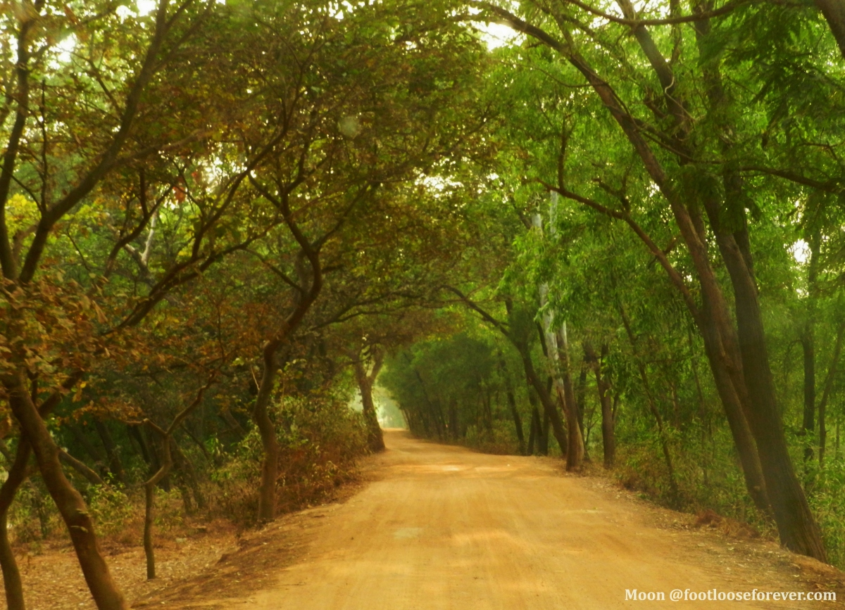 depth, wood, woods, Sonajhuri forest, Shantiniketan, WB