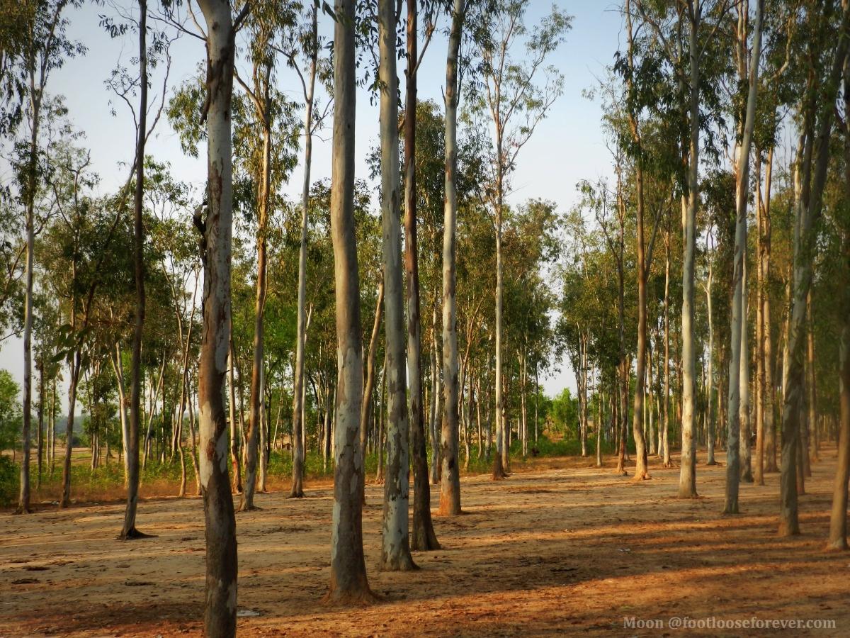sonajhuri forest, shantiniketan
