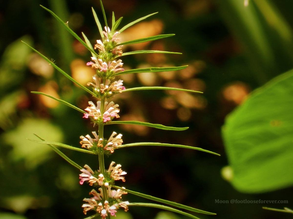 weeds, weed, flower