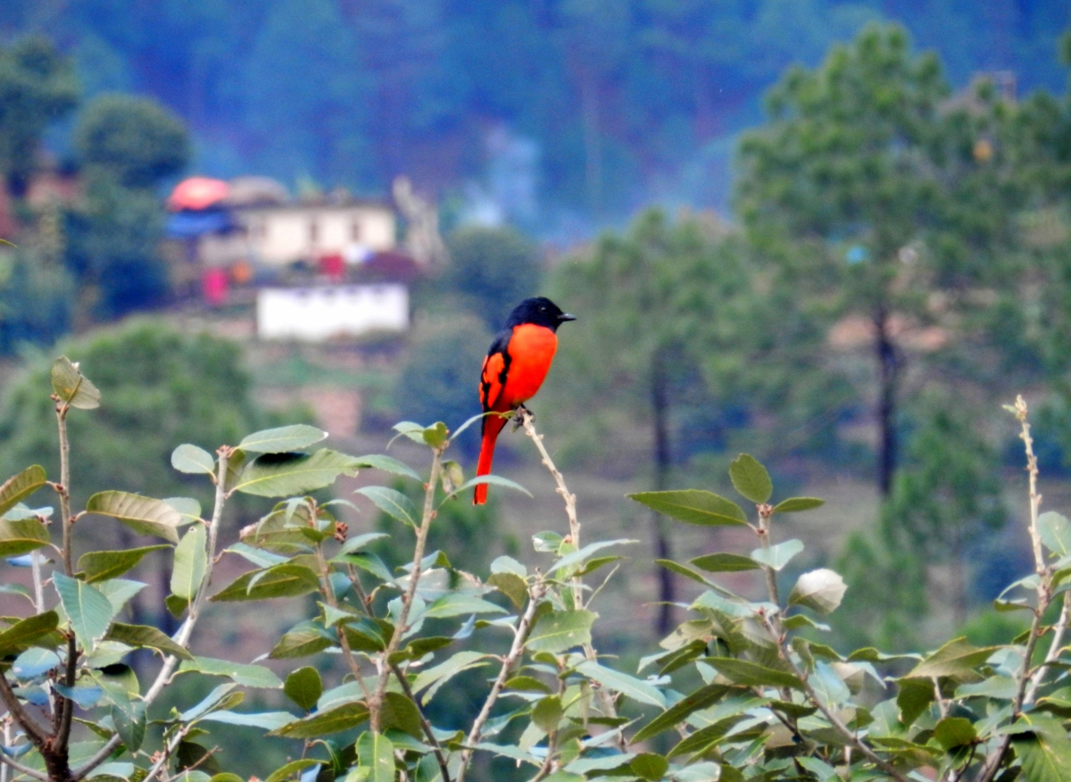 bird, Kausani, Uttarakhand, travel photo contest, explore the elements