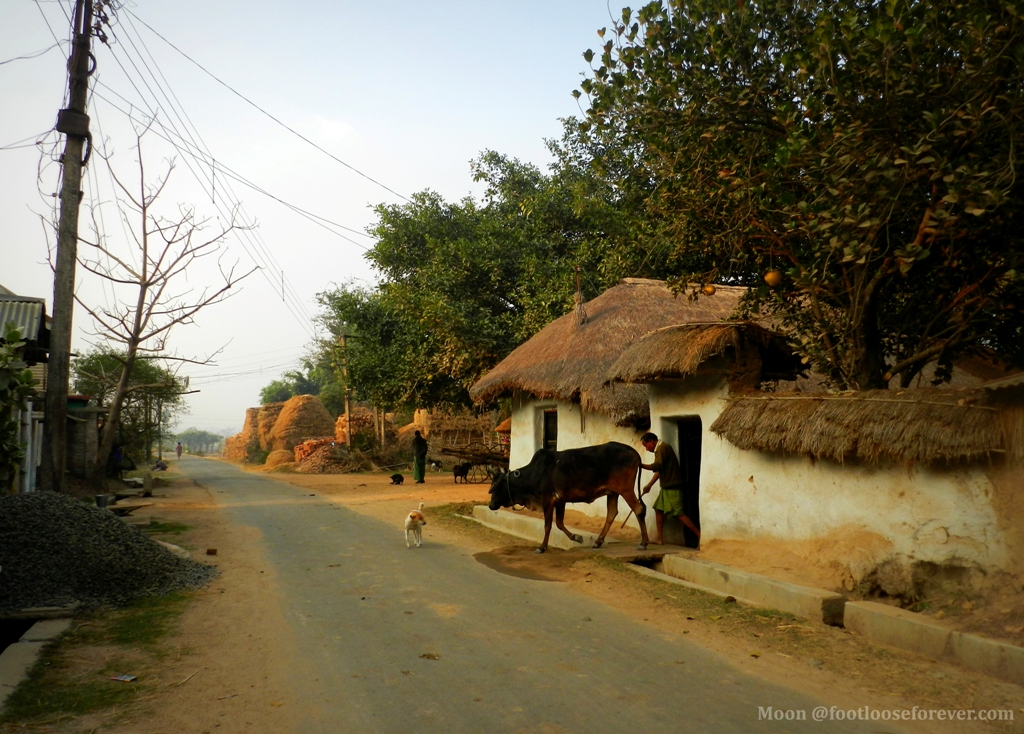 farmer going to field, bolpur, shantiniketan, rural life,