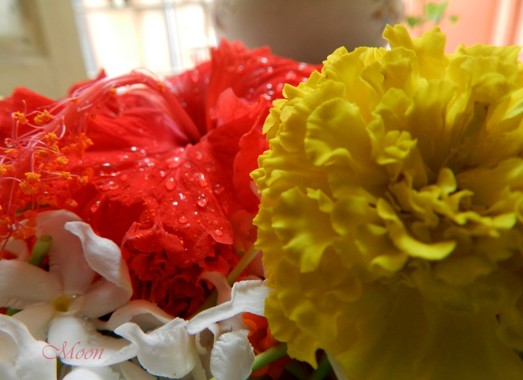 flowers, marigold, hibiscus, red, yellow