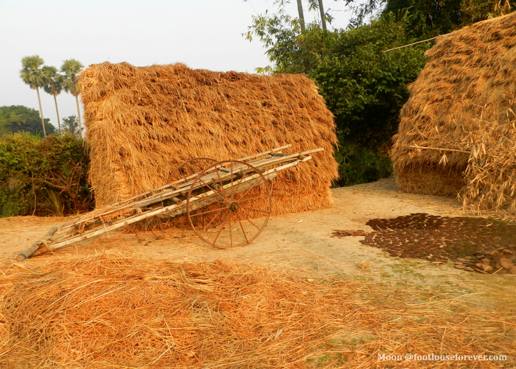 haystacks, village road, shantiniketan, bolpur