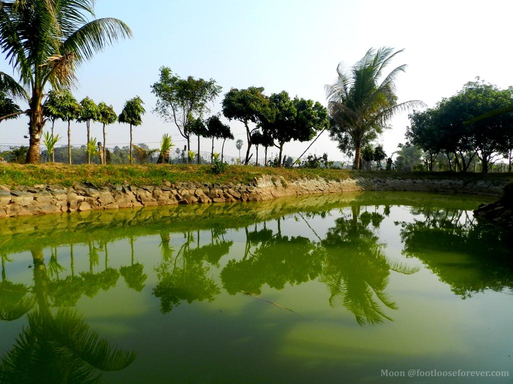 pond, reflection, rural bengal, shantiniketan, village