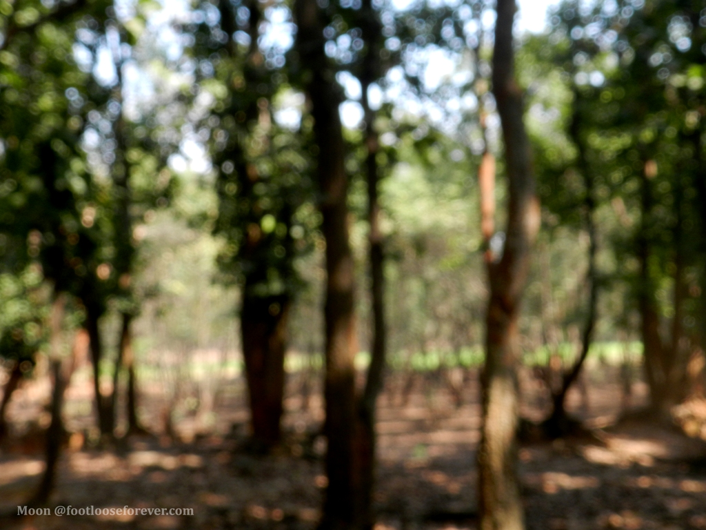 blurry trees, blur, bokeh