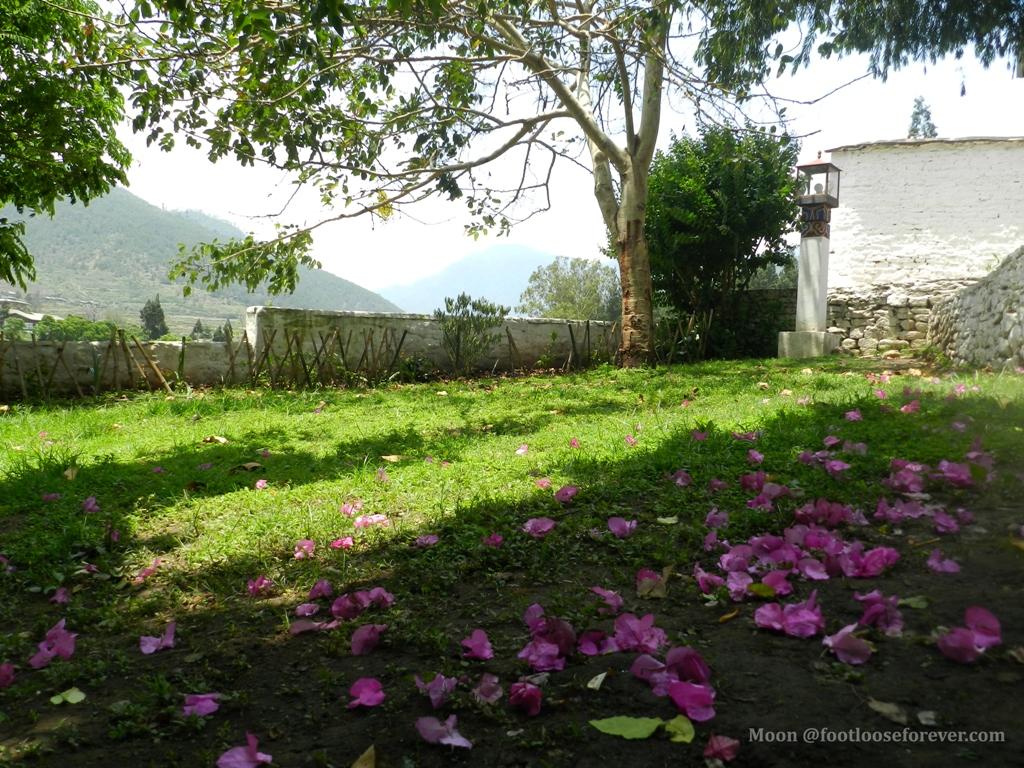 bougainvillea, punakha, monastery, bhutan,