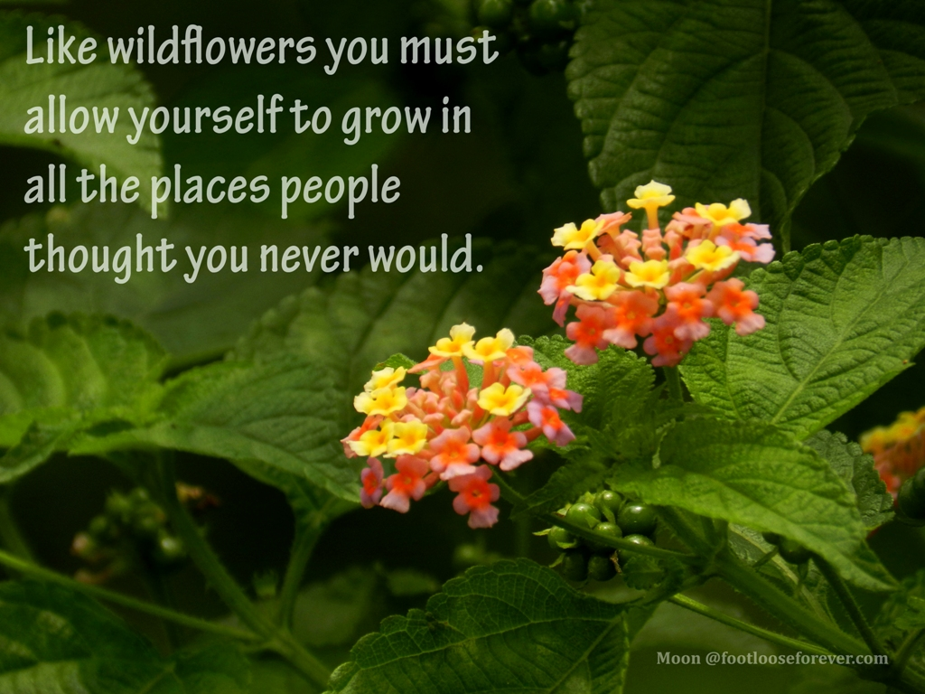 quote, quotes, wildflower, inspiring quotes