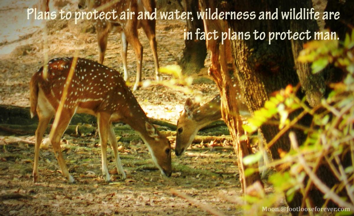 wildlife, nature, wildlife quote, nature quote, quotes, quote challenge, deer