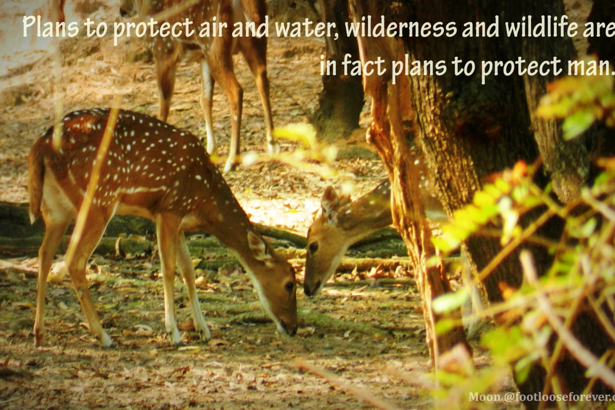wildlife, nature, wildlife quote, nature quote, quotes, quote challenge, deer