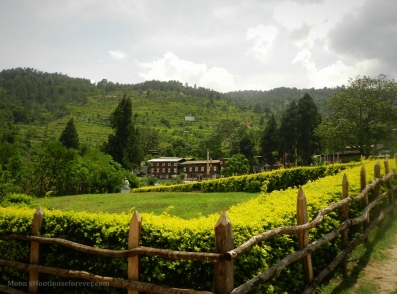 punakha monastery garden 2