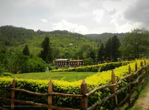 punakha monastery garden 2