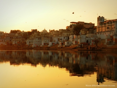 pushkar-1