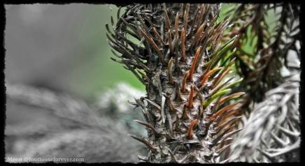 thorn, fern, mundane