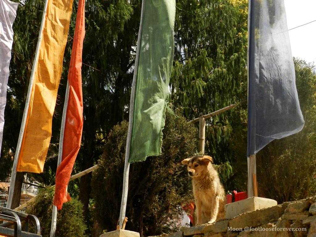 dog, thimphu, bhutan