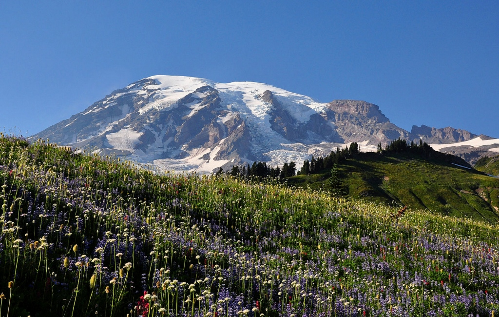 Mt Rainier National Park, seattle, usa