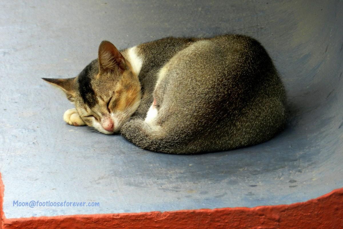 cat, sleep, sleeping cat, pets