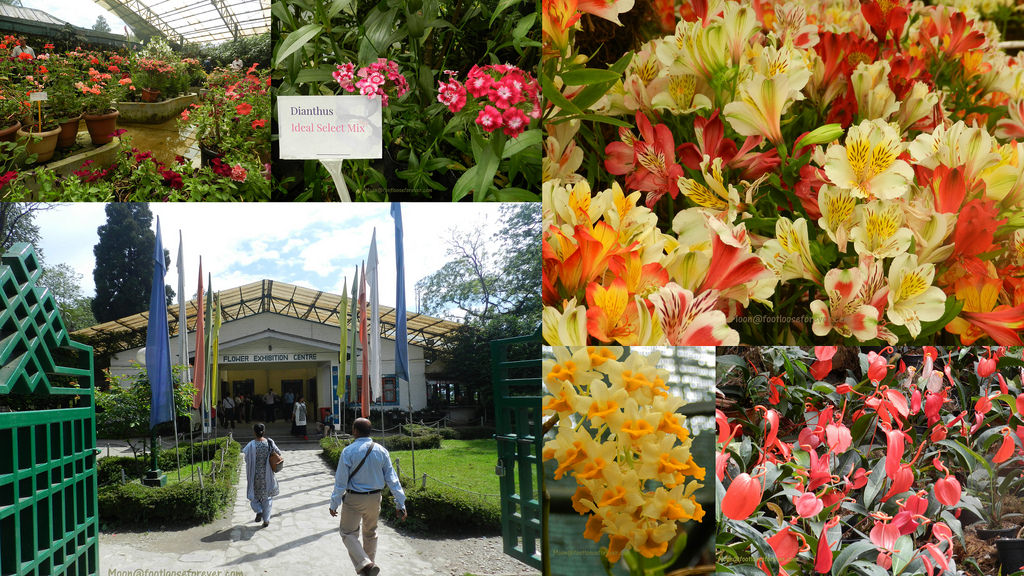 flower exhibition, gangtok, gangtok sightseeing, things to do Gangtok