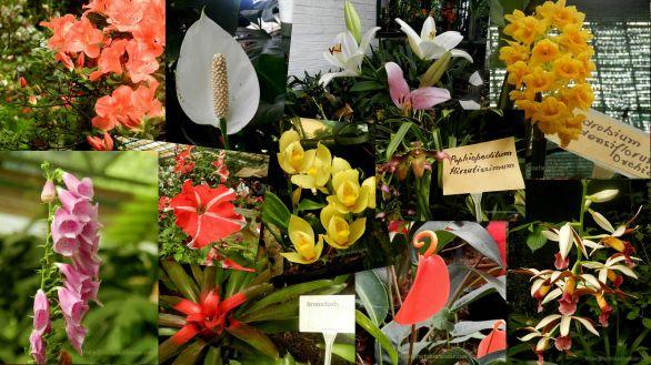 flower exhibition, gangtok, sikkim