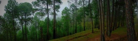 nature, solitude, alone, greenery, lachung, sikkim