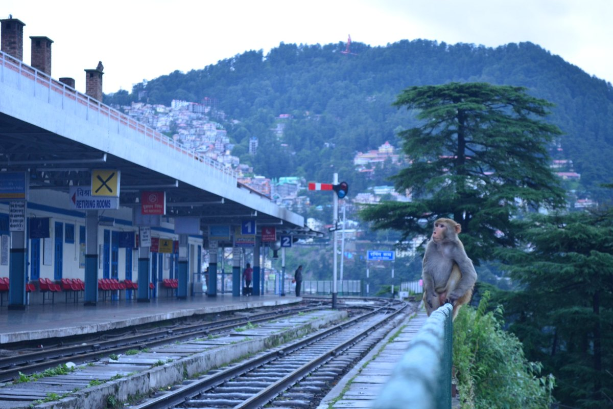 shimla, railway station, travel, india